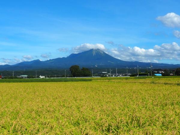 大山山麓米のおいしいお米 良産地から直送